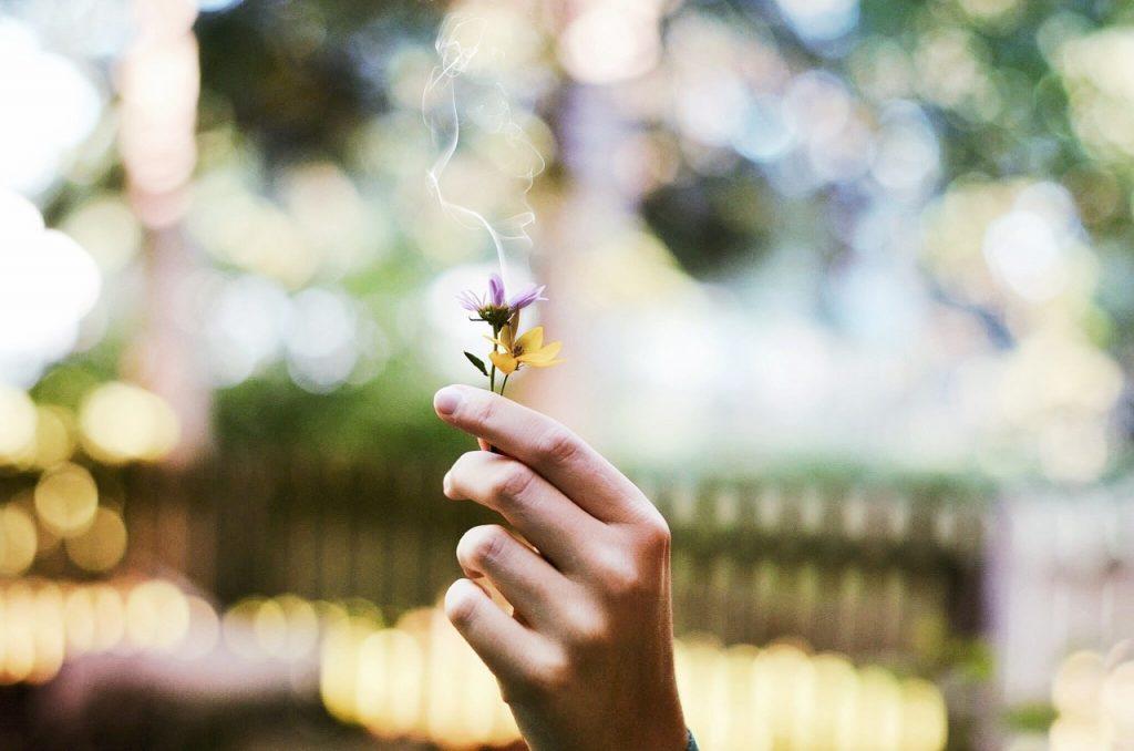Metáfora en la flor de la vida